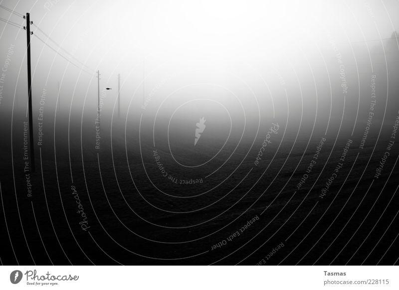 Last Day of Magic Energiewirtschaft Nebel Endzeitstimmung Elektrizität Strommast Vogel Sonne Schwarzweißfoto Außenaufnahme Menschenleer Licht Schatten