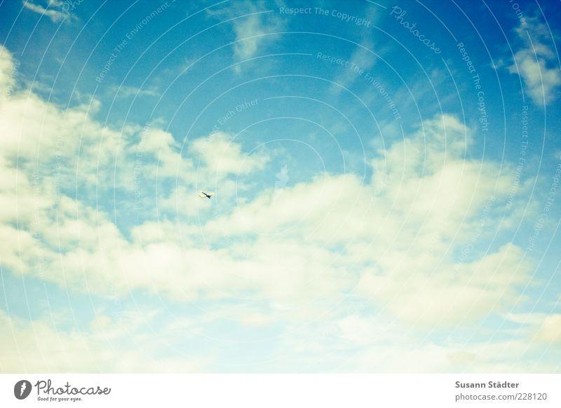 up blau Wolken fliegen Textfreiraum Himmel Blauer Himmel sommerlich Wolkenhimmel Wolkenformation nur Himmel
