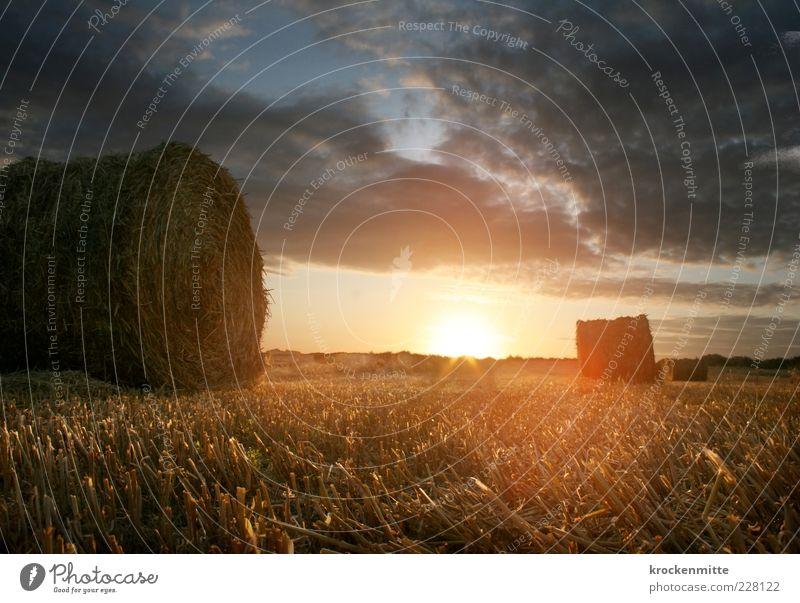 Morgenlicht IV Himmel Natur rot Sonne Sommer Wolken gelb Wiese Umwelt Landschaft Gras Feld Horizont Erde liegen Romantik