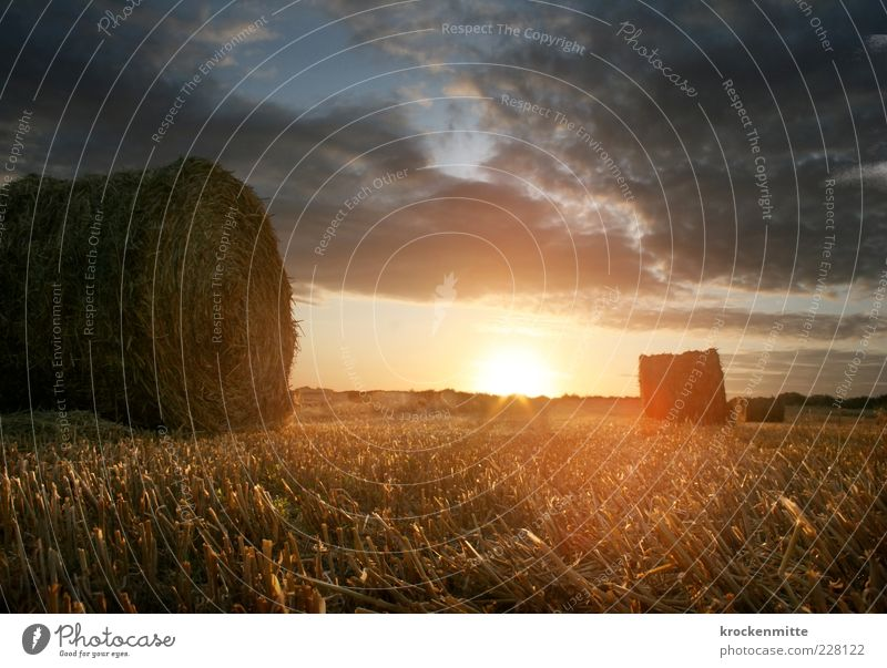 Morgenlicht IV Umwelt Natur Landschaft Erde Himmel Wolken Horizont Sonne Sonnenaufgang Sonnenuntergang Sonnenlicht Sommer Gras Wiese Feld liegen gelb rot