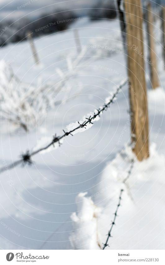 Stacheldraht Natur weiß Pflanze Winter kalt Schnee Umwelt Landschaft hell Eis Sträucher Frost Zaun gefroren Schönes Wetter Pfosten