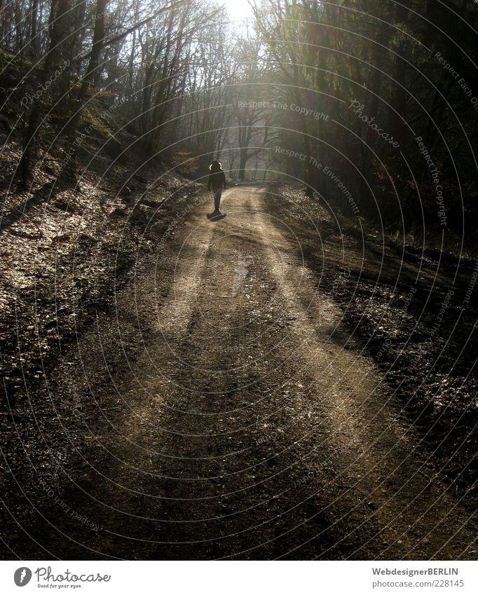 Sonniger Waldweg Frau Mensch Natur Einsamkeit Wald Umwelt Wege & Pfade gehen Spaziergang Fußweg Waldspaziergang