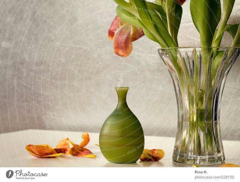 Still mit Tulpen Lifestyle Blume Vase verblüht gelb grün Vergänglichkeit Glasvase Blütenblatt Innenaufnahme Menschenleer Textfreiraum links Licht