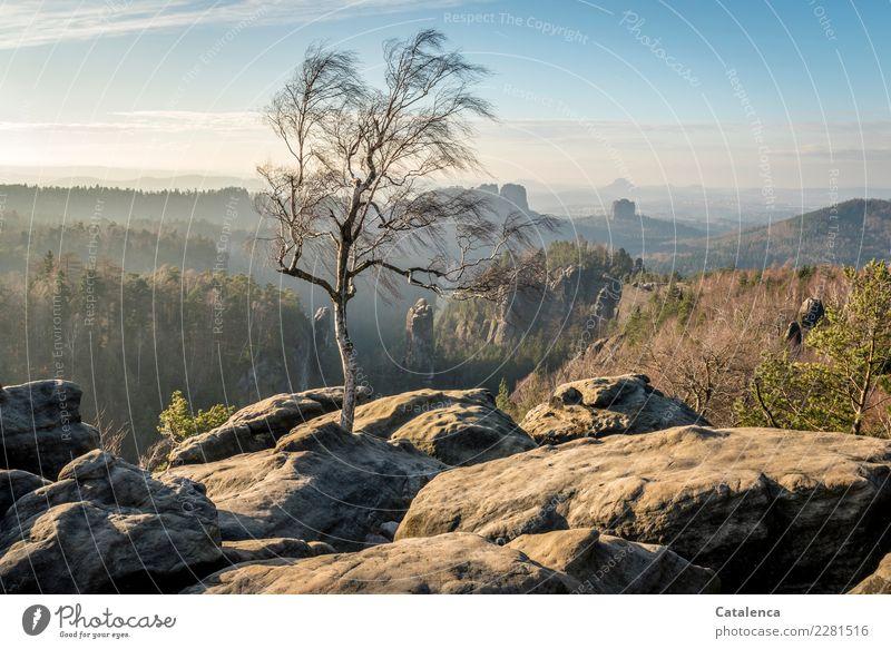 Birke die auf Felsen steht Natur Pflanze blau grün Landschaft Baum Winter Wald Berge u. Gebirge Umwelt braun Stimmung wandern leuchten Horizont