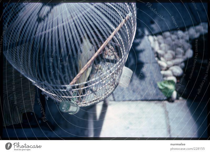 eingesperrt Natur Tier Stimmung Vogel Lifestyle gruselig trashig skurril Rahmen Haustier Gitter gefangen Papageienvogel Käfig Qual Folter
