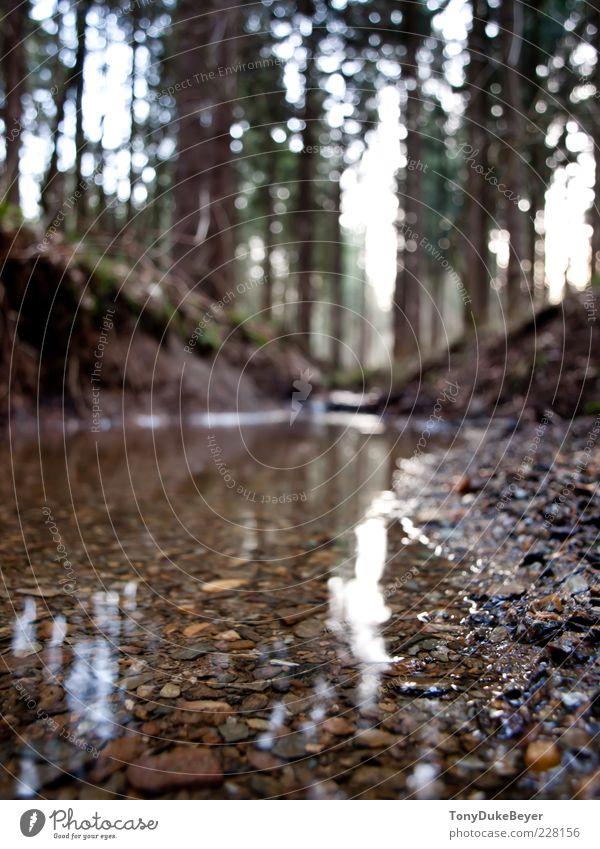 Little big River Natur Wasser Baum Pflanze Wald kalt Herbst Umwelt Sand Stein Luft nass Urelemente feucht Bach Bachufer