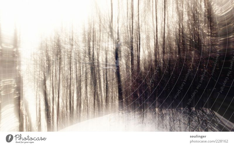 WildWood Natur Landschaft Pflanze Luft Himmel Wolkenloser Himmel Winter Eis Frost Baum Wald Hügel Holz ästhetisch braun Außenaufnahme abstrakt Muster