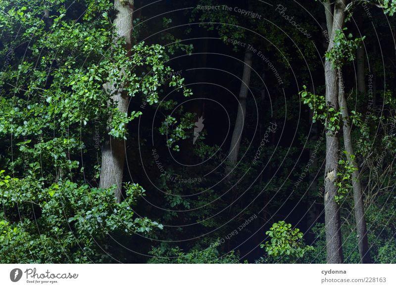 Tiefe Wälder Natur Baum Blatt ruhig Einsamkeit Wald dunkel Leben Freiheit Umwelt Landschaft träumen Angst ästhetisch Wandel & Veränderung Sträucher