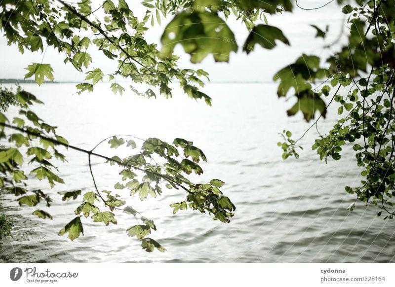 Erleuchtet Natur Wasser schön Ferien & Urlaub & Reisen Sommer Blatt Einsamkeit Umwelt Landschaft See Wellen einzigartig Zweig