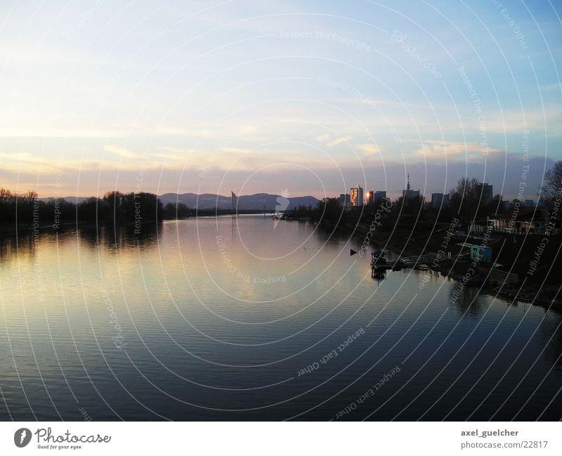 Donauinsel Wasser Baum blau groß violett Wien Donau Donauinsel