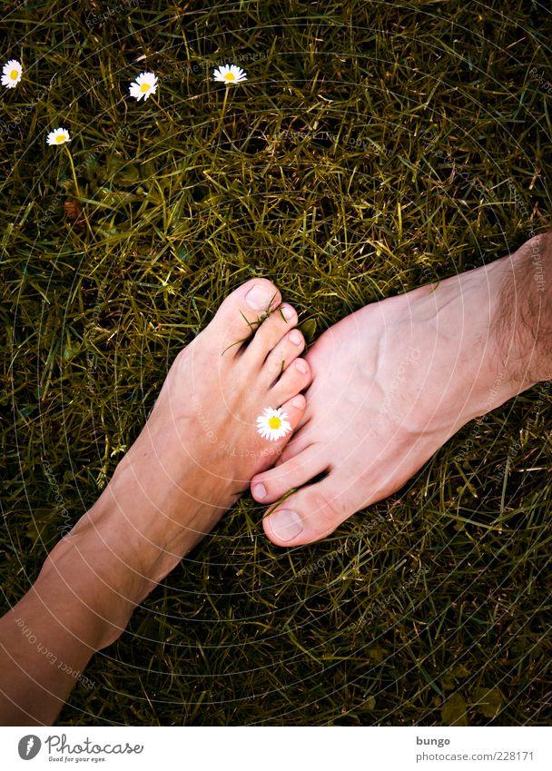 Touch Frau Mensch Mann Liebe feminin Wiese Gras Erwachsene Fuß Freundschaft Zusammensein Haut maskulin Sicherheit stehen nah