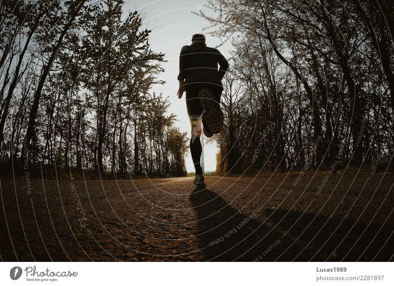 Running Gesundheit sportlich Fitness Sport Sport-Training Sportler Joggen Mensch maskulin Junger Mann Jugendliche 1 Baum Straße Wege & Pfade Diät laufen rennen