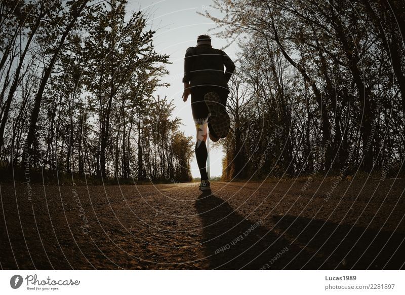 Running Mensch Jugendliche Junger Mann Baum Straße Gesundheit Wege & Pfade Sport maskulin Kraft laufen Geschwindigkeit Fitness sportlich dünn rennen