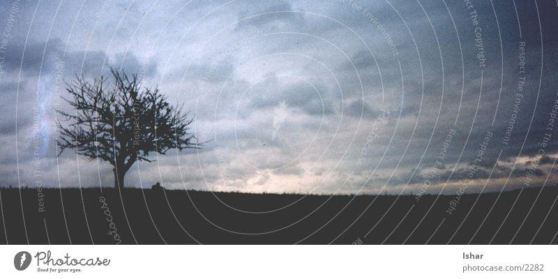 Lunarian Natur Himmel Baum Wolken Stimmung