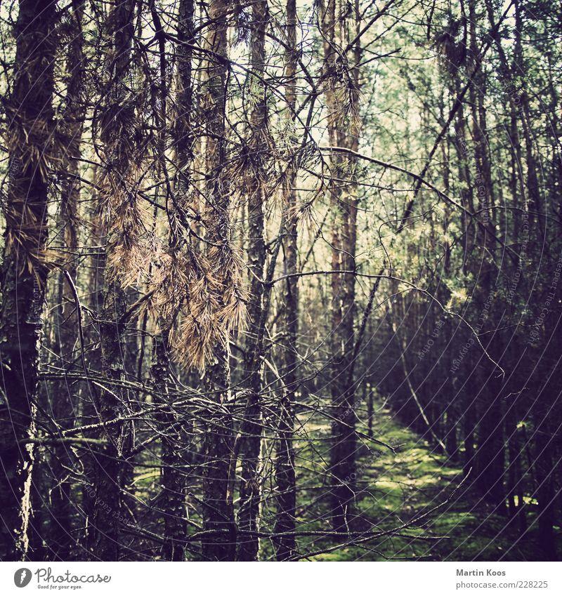 zum beispiel letztes jahr im sommer Natur Baum Pflanze Wald Erholung Umwelt Moos Nadelwald