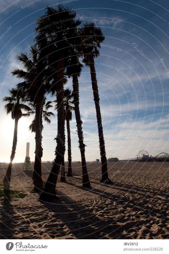 Venice Beach Himmel Sonne Ferien & Urlaub & Reisen Strand Meer Wolken Sand Tourismus USA Fußspur Amerika Palme Anlegestelle Sightseeing Kalifornien