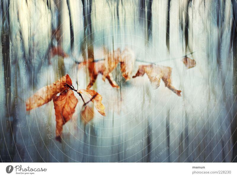 confused Herbst Winter Baum Blatt Zweig Laubbaum Wald außergewöhnlich dunkel fantastisch bizarr Surrealismus Farbfoto Außenaufnahme Detailaufnahme Tag Licht