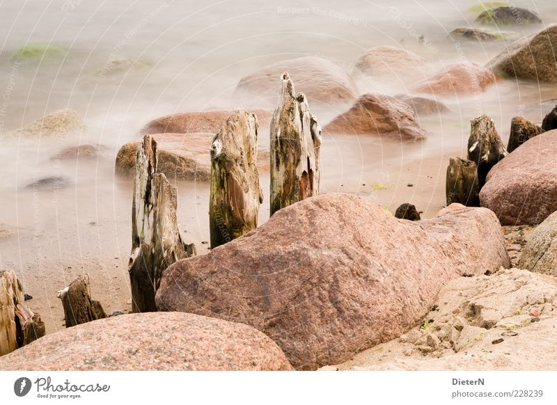 Standhaft Natur Wasser Sommer Meer ruhig Umwelt Sand Stein hell Nebel Klima Ostsee Buhne