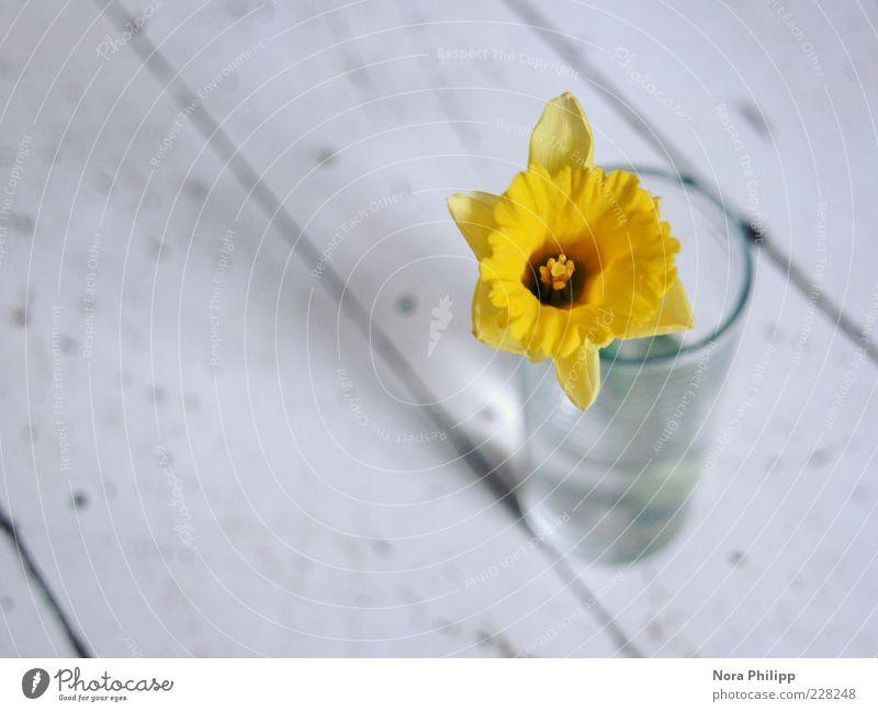 Wenn ich dich so sehe... Natur blau Pflanze Blume gelb Blüte Frühling Linie Glas natürlich ästhetisch zart Blühend Duft Blütenblatt Frühlingsgefühle