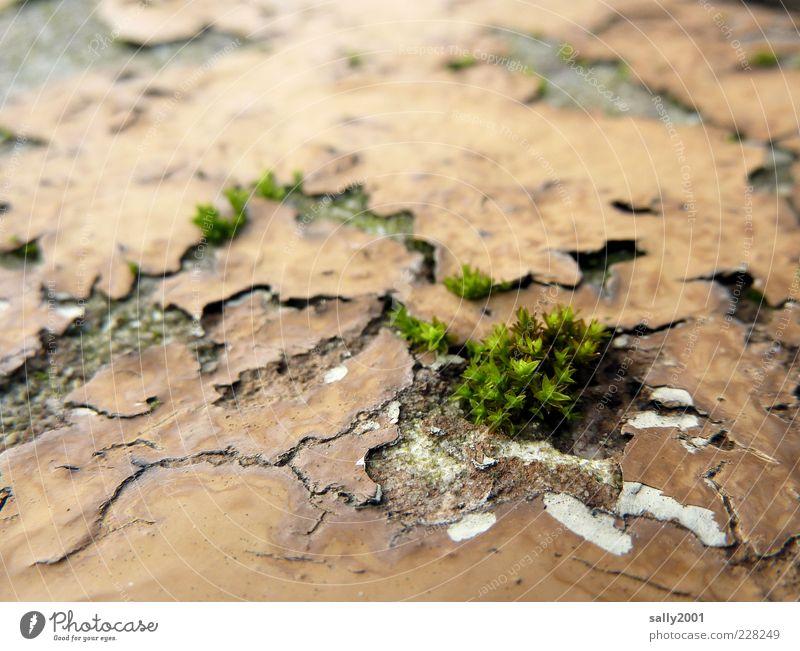 Nature is coming back... Pflanze Moos Mauer Wand Wachstum alt natürlich trashig grün Kraft Leben Überleben Umwelt Verfall Vergänglichkeit Wandel & Veränderung