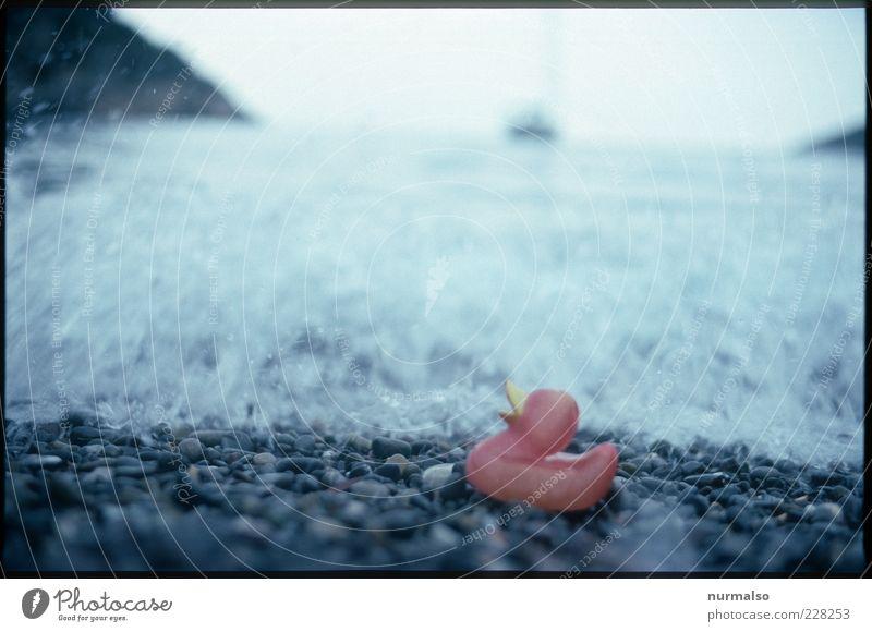 alleine gelassen Strand Meer Wellen Natur Urelemente Wasser Klima Klimawandel Küste quitscheente Badeente trashig trist Stimmung gestrandet Stein ausgebleicht
