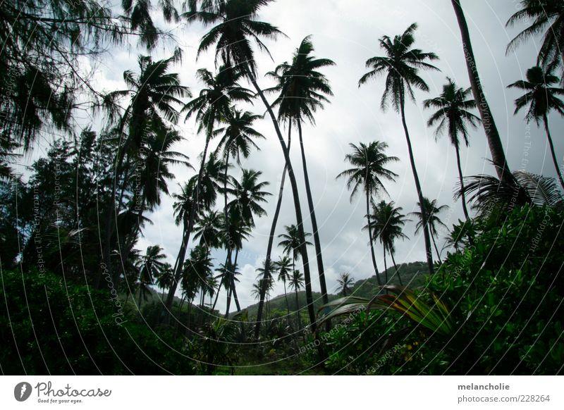 Seychellen Palmenblick Himmel schön Pflanze Ferien & Urlaub & Reisen Sommer Wolken Erholung Schönes Wetter Palme exotisch Oase