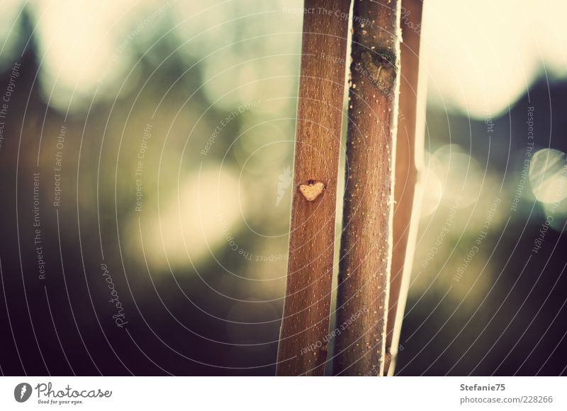 Natur grün schön Baum Pflanze Freude Leben Gefühle Holz Glück braun Herz Fröhlichkeit einzigartig niedlich Warmherzigkeit