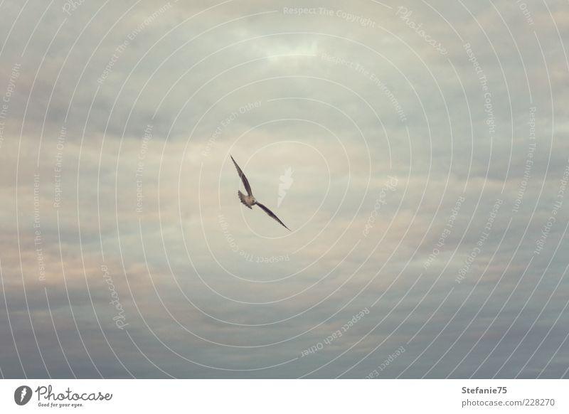 Vogel fliegt hoch hinaus Tier Wildtier Möwe 1 Bewegung drehen fliegen kämpfen einfach elegant frei Fröhlichkeit schön natürlich wild Stimmung Freude Kraft Mut