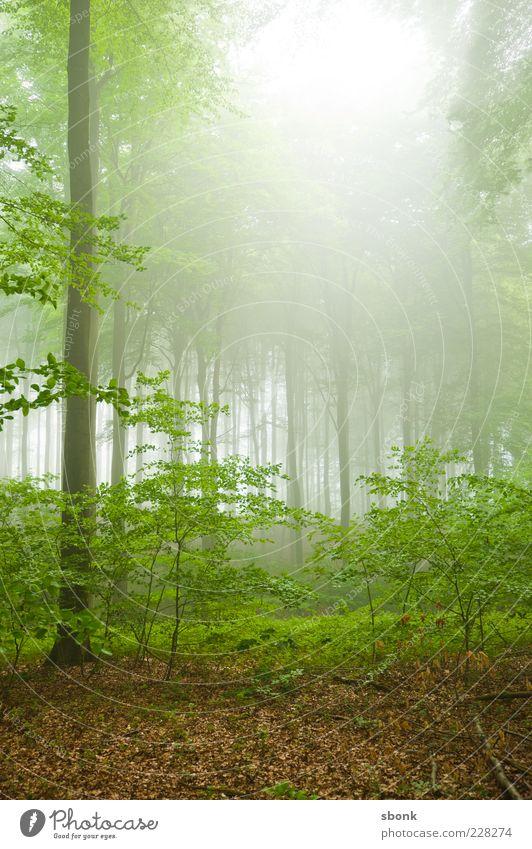 waldwald Natur grün Baum Pflanze Sommer Wald Umwelt Landschaft Nebel Sträucher Loch Urwald Nebelwald