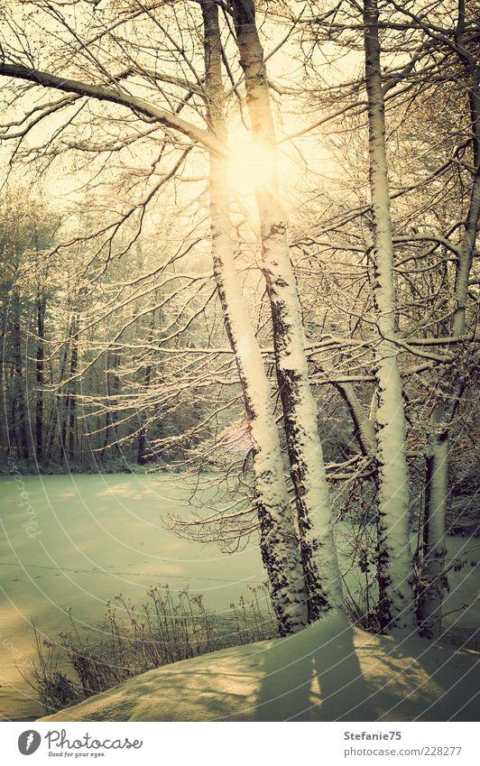 Natur schön Baum Sonne Freude Winter Wald kalt Schnee Gras Glück träumen Park Denken Landschaft Eis