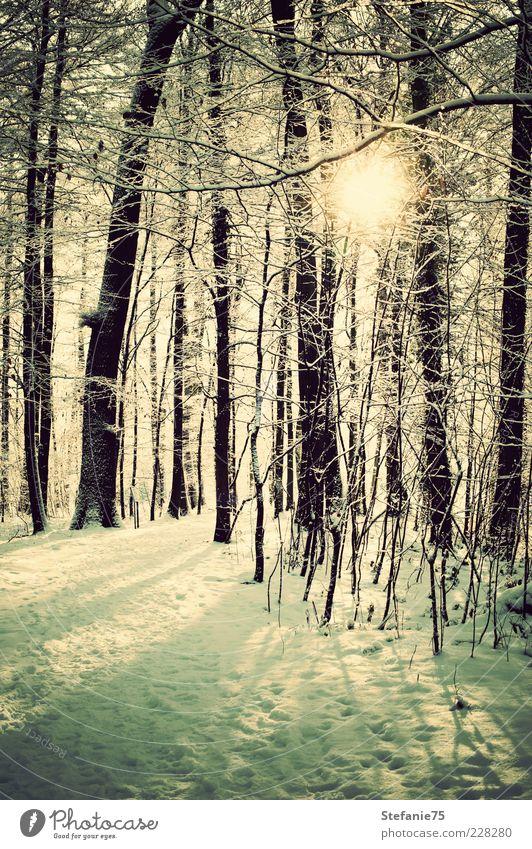 Funkelnd Natur Landschaft Pflanze Urelemente Erde Sonne Sonnenlicht Winter Schönes Wetter Eis Frost Schnee Baum Park Wald atmen Denken frieren Coolness einfach