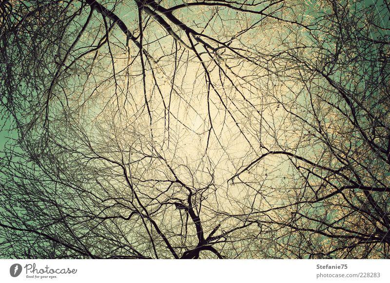 Himmel Natur schön Baum Sonne Freude Winter kalt Freiheit oben Luft Denken träumen Eis Erde frisch