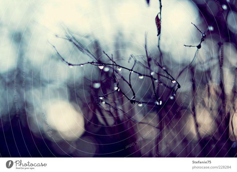 Kleine Diamanten Natur Urelemente Wassertropfen Frühling Winter Schönes Wetter Regen Baum Sträucher Garten Tropfen einfach Macht Tatkraft Leidenschaft Romantik