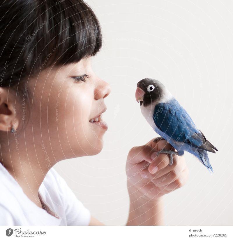 Vögelchen blau Kind Mädchen Kindheit Kopf 1 Mensch 3-8 Jahre Tier Haustier Vogel Papageienvogel Kramer Sittich Agapornis Wellensittich Schnabel Feder
