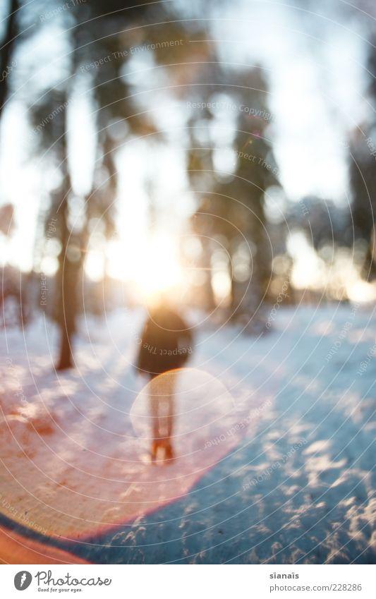 kopfleuchten Wohlgefühl Winter Schnee Mensch maskulin androgyn 1 Umwelt Natur Wald stehen Blendeneffekt Blendenfleck anonym mystisch Idee Brainstorming heilig