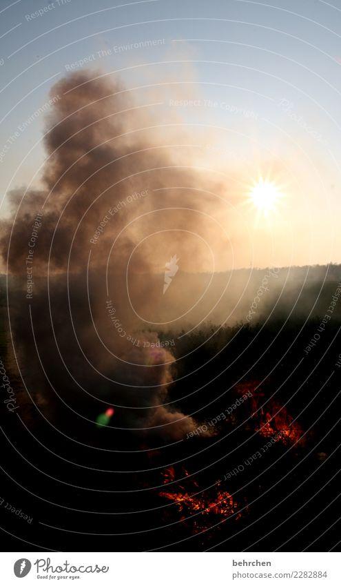 wachsen und gedeihen | wenn erst einmal angefacht! Sonne dunkel Wiese Feld Feuer heiß Rauch brennen Feuerstelle Osterfeuer Waldbrand