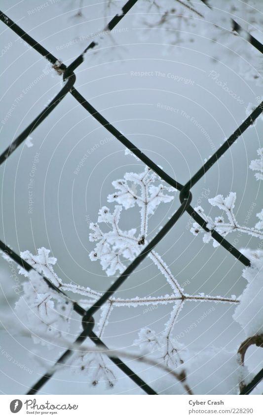 Kristall am Maschendrahtzaun Pflanze Winter Eis Frost Schnee Gras Sträucher Wildpflanze Gedeckte Farben Außenaufnahme Makroaufnahme Dämmerung Menschenleer