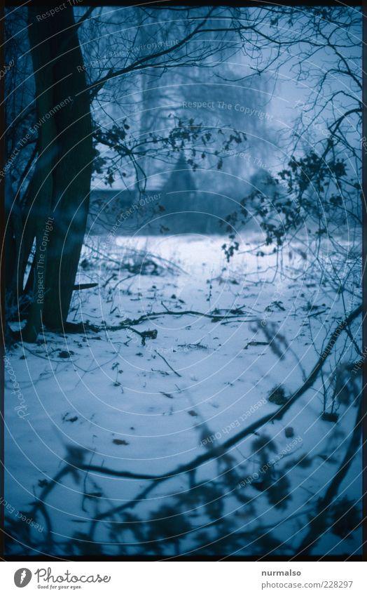 finster Winter Umwelt Natur Klima schlechtes Wetter Park Wald Haus Hütte Jagdrevier Holzhaus dunkel gruselig kalt trist unheimlich Märchen Frost Morgen