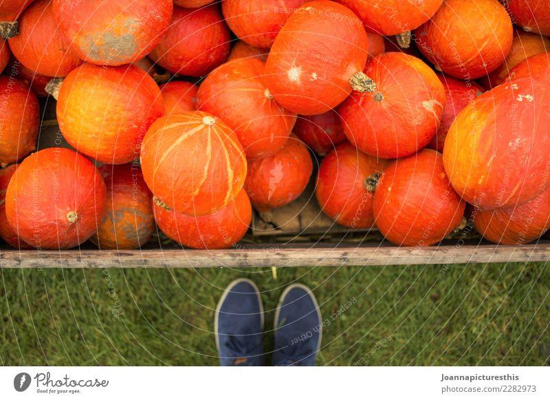 Hello pumpkins Mensch Pflanze Gesunde Ernährung Herbst natürlich Garten Fuß orange frisch kaufen Landwirtschaft Gemüse Bauernhof Ernte Bioprodukte Handel