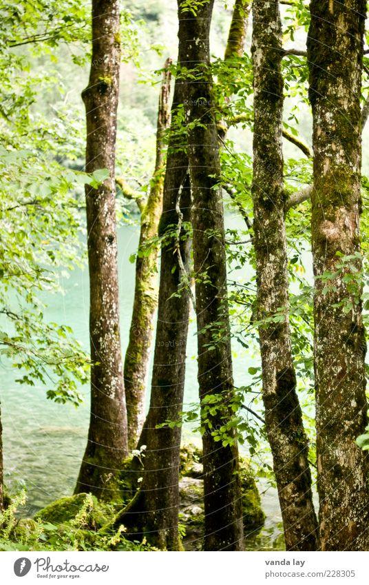 Bäume Natur Baum Pflanze Sommer Blatt Wald Umwelt natürlich Klima Seeufer Baumstamm