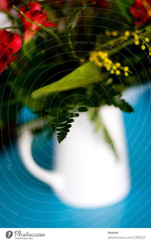 Sträußle weiß grün schön Pflanze rot Blume Blatt Blüte Tisch Blühend Blumenstrauß türkis Duft Kannen Porzellan Krug