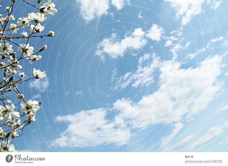 Wind aus Südwestfrühling Himmel Ferien & Urlaub & Reisen Pflanze Sommer Blume Wolken Umwelt Leben Blüte Frühling Bewegung Stimmung Horizont Wetter