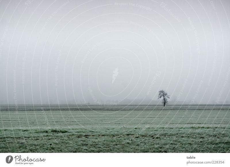 frieren Himmel Natur grün Baum Pflanze Winter Einsamkeit Ferne kalt Wiese Herbst Umwelt Landschaft grau Gras Wetter