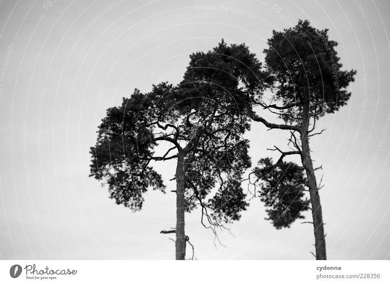 Zwei ruhig Umwelt Natur Himmel Baum ästhetisch Partnerschaft einzigartig nachhaltig Vergänglichkeit Wachstum Wandel & Veränderung paarweise 2 berühren