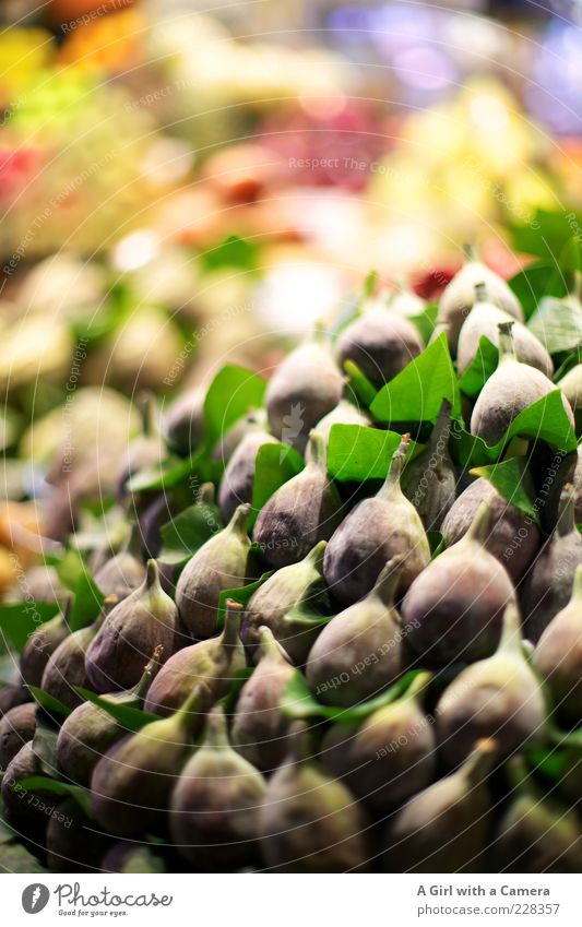 so was von Feige Lebensmittel Feigenblatt Ernährung Bioprodukte Vegetarische Ernährung liegen exotisch Gesundheit mehrfarbig violett Stapel Vitamin vitaminreich