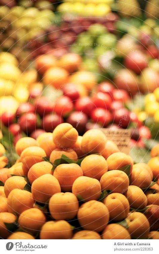 Aprikosen sind heute im Angebot.... Lebensmittel Frucht Pflaume Bioprodukte Gesundheit saftig süß mehrfarbig Vitamin Stapel Markt Marktstand orange