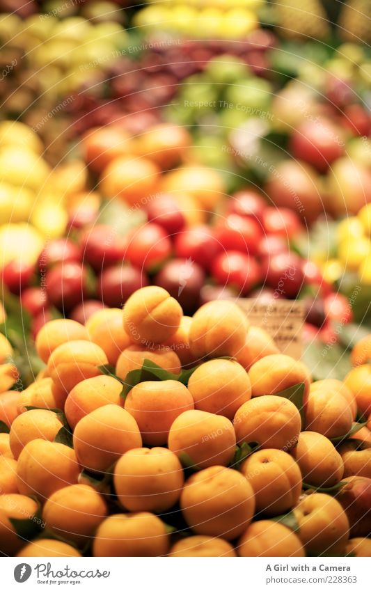 Aprikosen sind heute im Angebot.... Lebensmittel orange Gesundheit Frucht süß viele Markt Stapel Vitamin Bioprodukte saftig Ware Ernährung Marktstand Pflaume