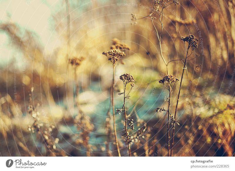 candy_World Natur Pflanze Sonnenlicht Winter Gras Wildpflanze Wiese natürlich Tag Licht Schatten Kontrast Schwache Tiefenschärfe Sträucher trocken Menschenleer