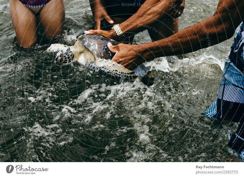 Gefangene Meeresschildkröte Mensch Natur Ferien & Urlaub & Reisen Sommer Wasser Hand Tier Ferne Strand Leben Umwelt Tourismus Freizeit & Hobby Arme Abenteuer