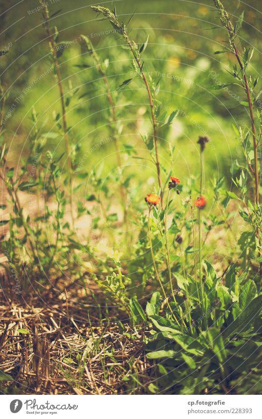 Vergrünt Natur Pflanze Blume Sommer Wiese Herbst Gras Garten Blüte Boden Stengel Schönes Wetter Duft Grünpflanze